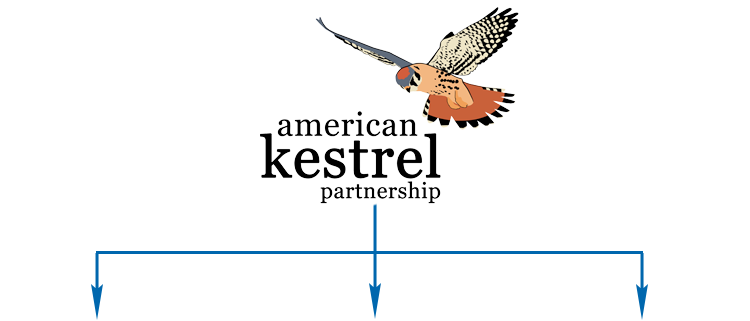 American Kestrel Partnership segments