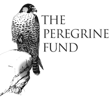 The Peregrine Fund